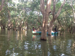 kampong-phluk-floade-forest-tours